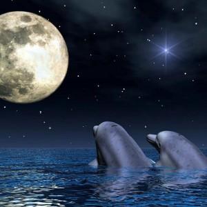delfines y luna llena
